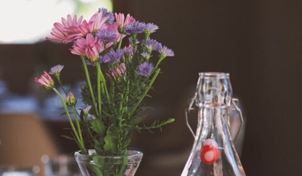 blog-flowercare-florazu-1