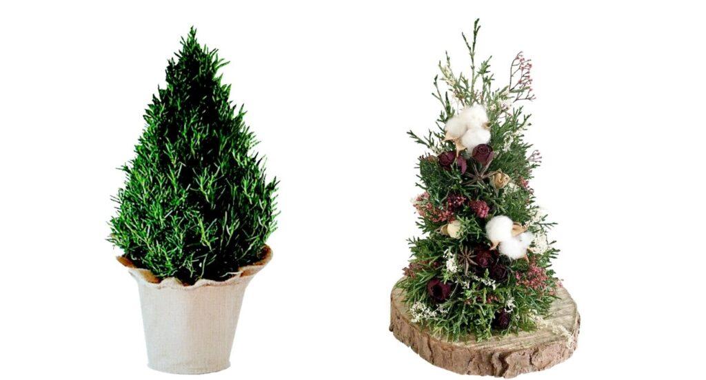 blog-florazu-small-trees