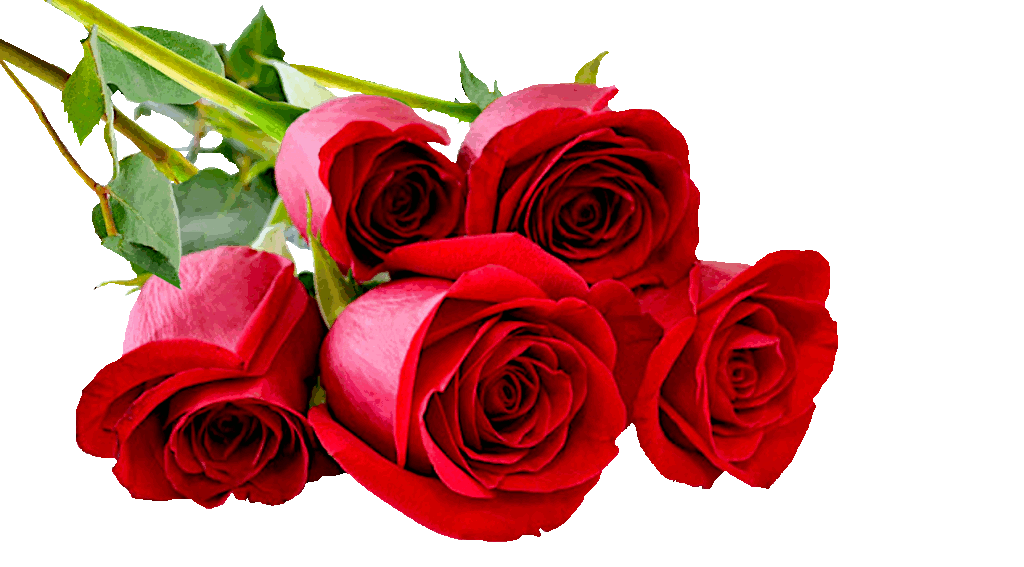 rose-photo-final