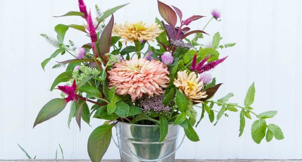herbs-article-florazu-header