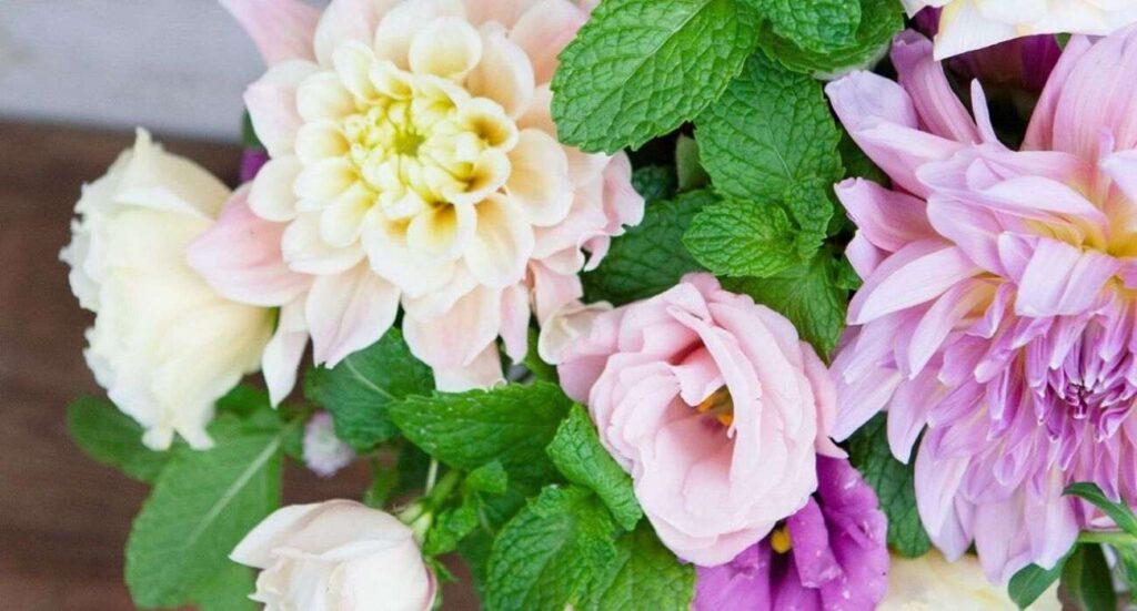 herbs-article-florazu-mint